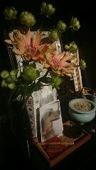 ハウルとお花