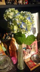 ハウルタクに紫陽花