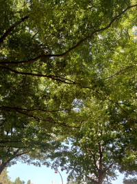 駒沢公園緑